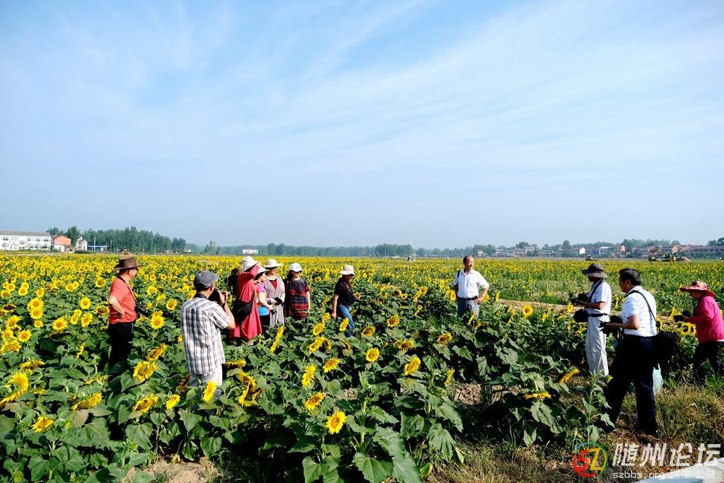 9、摄影家在均川龙泉村向日葵基地采风  作者:韩铁流.jpg