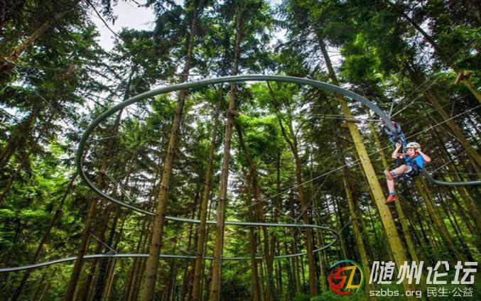 4.丛林飞梭.jpg